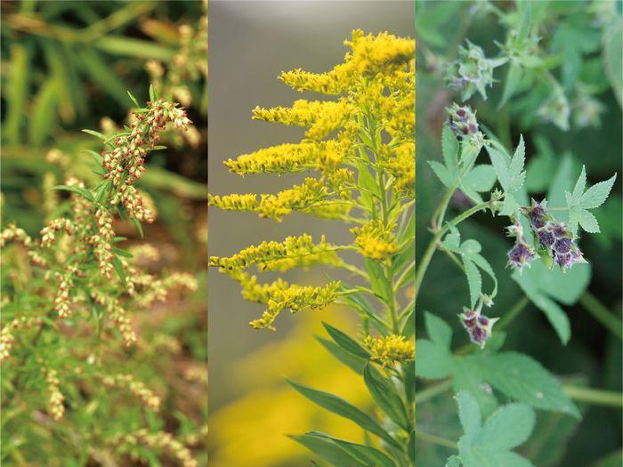 秋の花粉症 花粉用メガネ 花粉用ゴーグル