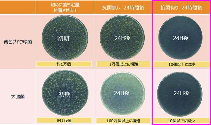 HOYA抗菌レンズ 抗菌実験 黄色ブドウ球菌 大腸菌
